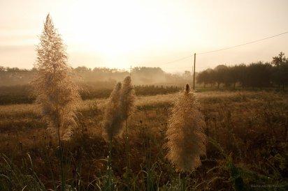 Felder morgens, nahe Lucca